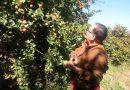 MelaGiro: a San Mango Cilento alla scoperta di storie di mele e meleti